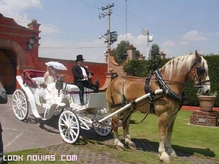 coche de caballos sin capota