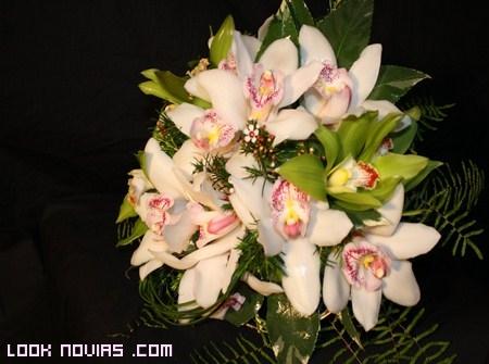 orquídeas para novias 2012