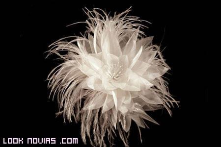 plumas para recogido novias